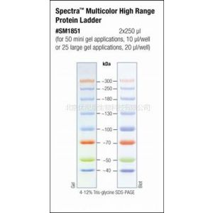 【pierce Fermentas预染蛋白 Marker Ladder 26616】价格 厂家 中国供应商