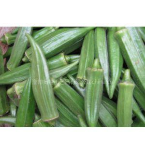 供应反季节黄秋葵