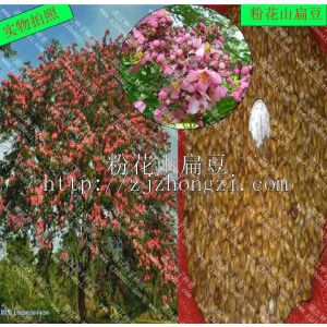 供应供应粉花山扁豆种子