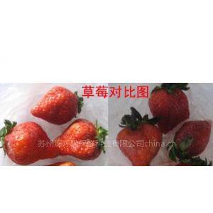 自发气调果蔬保鲜袋|水果保鲜袋|净菜保鲜