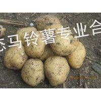 供应大量供应讷河脱毒马铃薯种子菜豆