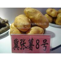 供应供应脱毒马铃薯土豆种子冀张薯八号市场价格