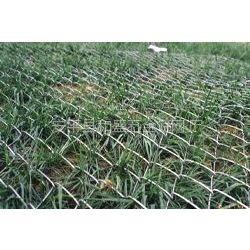 供应合肥勾花网 菱形网 活络网 斜方网 边坡防护网 河道堤坡加固网 喷浆挂网