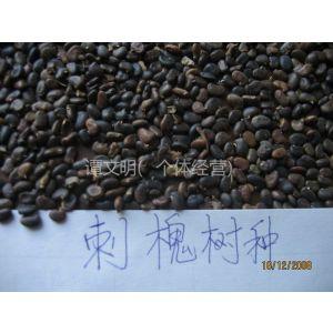 供应供应刺槐种子价格 刺槐籽出售