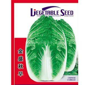 供应白菜种子金盛秋早白菜种子
