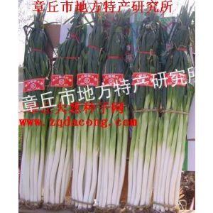 供应葱种子 高产 新品种 大葱种子 家禄三号 章丘大葱种 山东大葱种 葱籽 葱子 章丘大葱种子网
