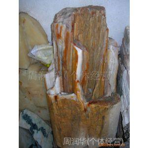 供应进口天然木化石树化石树化玉装饰礼品玉石玉器玉雕礼品工艺品摆设