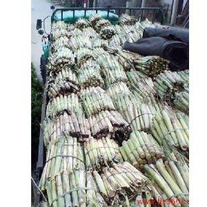 供应供应甘蔗种 黄皮果蔗种苗 优质高产甘蔗种 水果甘蔗种