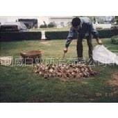 供应东莞白蚁防治;东莞杀虫灭鼠;东莞杀臭虫、东莞清洁;东莞杀虫灭鼠器械及药品销售,清洁用品销售