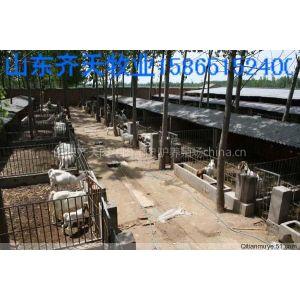 供应*松原适合养殖什么品种羊 哪里有卖小羊种的