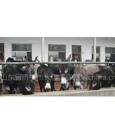 供应养驴效益分析 肉驴养殖效益分析 肉驴的养殖成本 山东三旺牧业