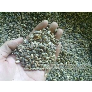 供应批发油松种子 优质油松种子批发价格