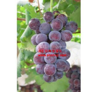 供应上海农家乐58同城 上海周边十大农家乐 推荐草莓采摘游
