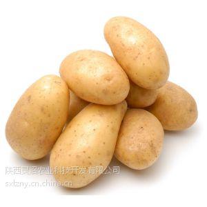 供应西安蔬菜配送 西安净菜配送 土豆 洋芋 地蛋 马铃薯
