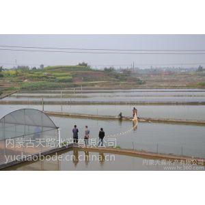供应泥鳅价格台湾泥鳅苗提供泥鳅养殖技术科研成果