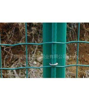 供应Supply Euro Welded Fence
