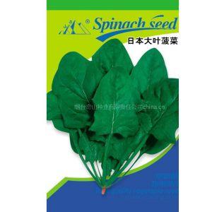 供应日本圆叶菠菜种子