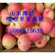 供应山东省潍坊市嘎啦苹果