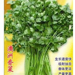 供应澳洲进口香菜种子