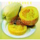 供应珍稀特色蔬菜——金丝瓜种子