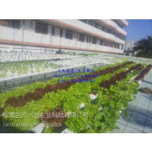 供应学校生物劳动实验基地,厂房楼顶别墅楼顶改造空中菜园