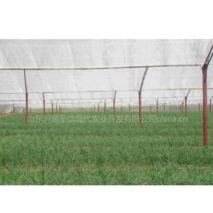 有机韭菜生产基地