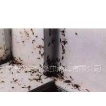 供应专业灭臭虫,虱子,跳蚤,蚊蝇威锋杀虫公司
