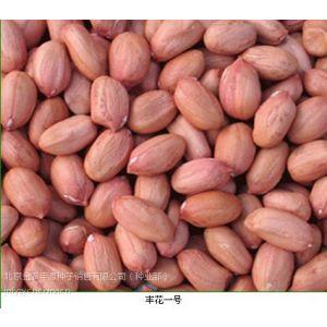 供应农科院提供优质花生种子黑花生种子花生种子新品种