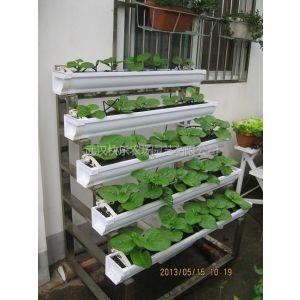 供应自动种菜机 自动供水育菜机 阳台小菜园种菜设备 智能种植设施