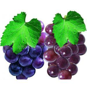 供应原花青素/葡萄籽提取物