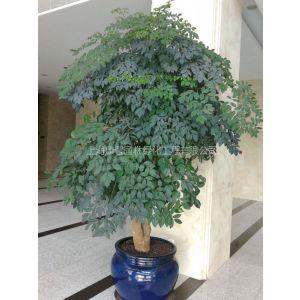 上海浦东植物租赁公司、浦东盆栽租赁公司