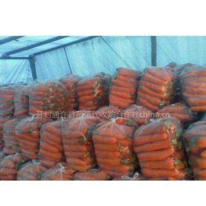 供应河南通许万亩胡萝卜成熟上市