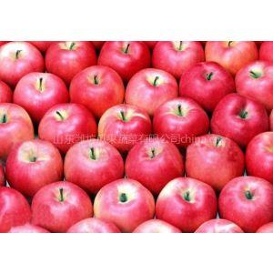 供应山东美八苹果
