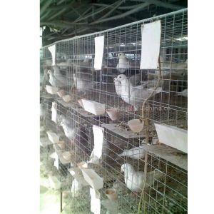 供应鸽子笼图片
