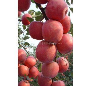 供应供应桃树苗,梨树苗,苹果苗,木瓜苗,柿子苗,山楂苗,核桃苗,花椒苗