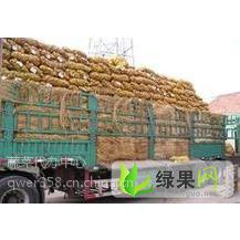 供应大量辽宁省锦州凌海万亩优质新鲜荷兰十五土豆7月上市 质量