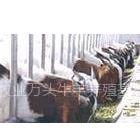 供应波尔山羊养殖效益