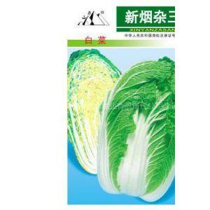 供应白菜种子新烟杂三号白菜种子