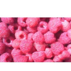 供应供应灯笼果苗、树莓苗、黑加仑苗、蓝莓苗、葡萄苗、草莓苗