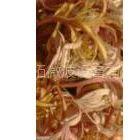 供应金银花干燥设备