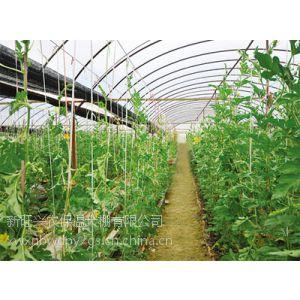 供应蔬菜大棚|