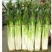 供应大葱种子批发  大葱种子经营