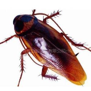 供应东莞专业灭蟑螂,杀虫灭鼠,除四害