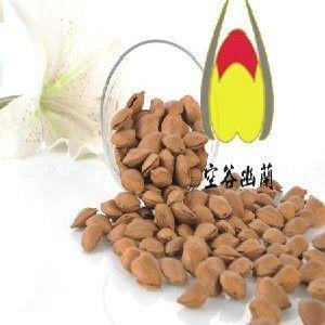 供应豫圣源杏仁,新疆有纸皮核桃吗?你对杏仁的功效了解多少呢