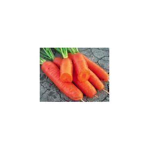 供应新鲜胡萝卜 日本三红