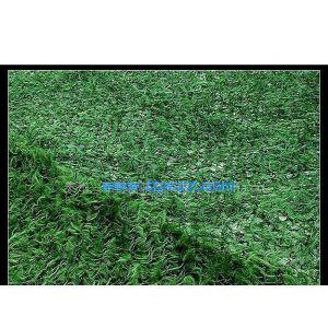 供应松针草绿色伪装网