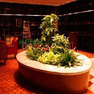 供应成都会议植物租摆会议室植物摆放方案-菜医生工作室