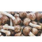 供应姬松茸蜂蛹,牛肝菌鸡枞,松茸,老人头,野生菌