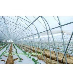 供应杭州富阳反季节水果热镀锌钢管大棚骨架 GP825