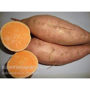 供应特级鲜食地瓜新北京红(烟薯25):是目前代替遗字138,西农431,北京553的品种。